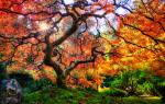 default_image-by-michael-matti-famous-japanese-garden-tree-in-portland-portland_-or